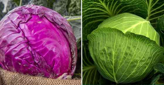 Types Of Cabbage Green Red White Savoy Napa And More Varieties