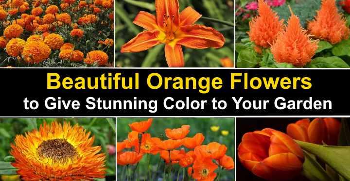 Types Of Orange Flowers Stunning