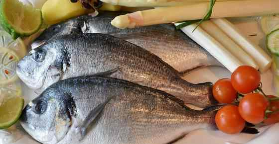 Types Of Fish With Their Name Picture And Flavor Best Guide