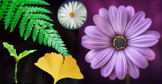 Types Of Plants Different Kinds Of Plants And Their Classification