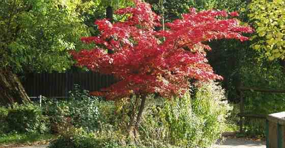 Decorative Dwarf Trees For Landscaping  from leafyplace.com