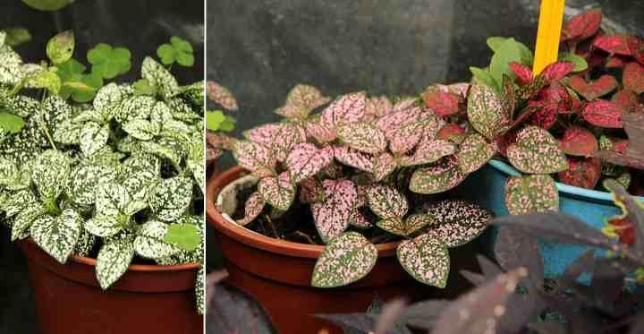 Let/'s Polka..Dot Plant Pot Cover