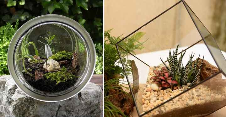 The Best Closed Terrarium Plants With Names And Pictures