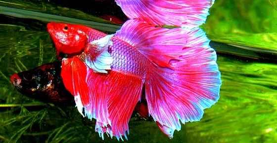 Exotic Cool And Unique Freshwater Aquarium Fish With Pictures