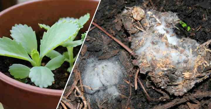 Mold On Plant Soil How To Get Rid Of Mold On Houseplant Soil