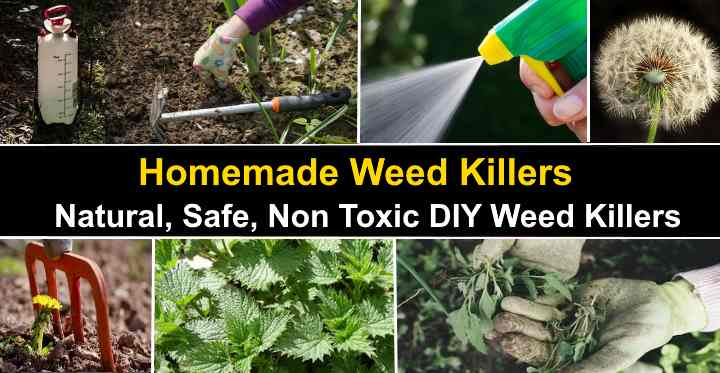 13 Homemade Weed Killers Natural Safe Non Toxic Weed Killers