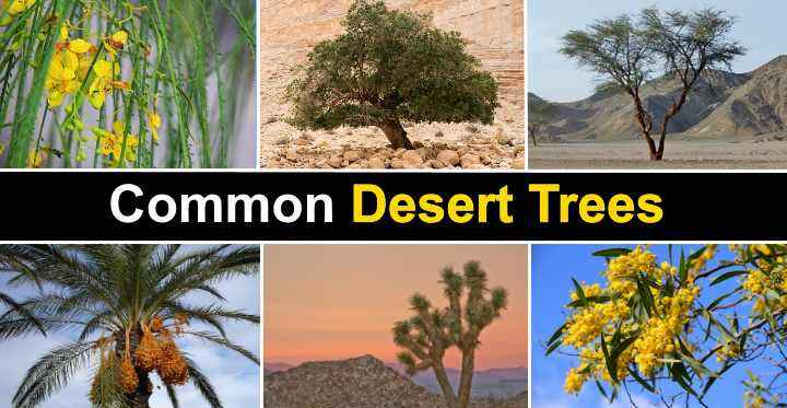 The Best Desert Trees With Pictures And Names