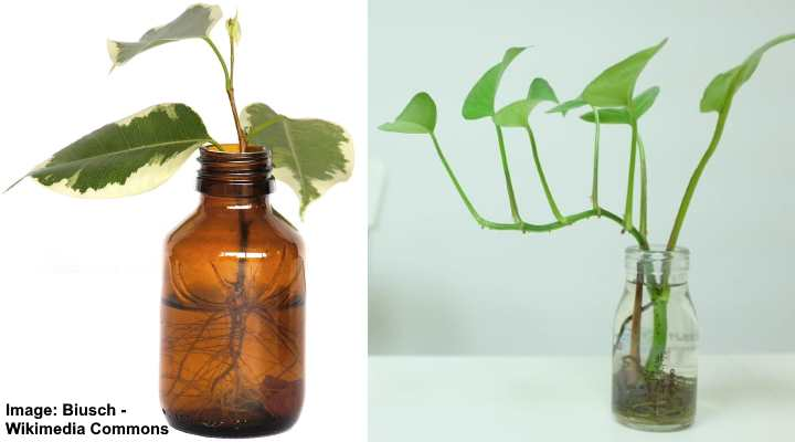 Plants That Grow In Water Herbs Indoor Plants And More Plants