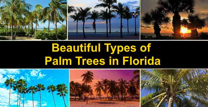 Types Of Palm Trees In Florida With Pictures And Names