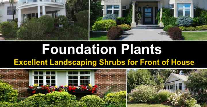 30 Foundation Plants Landscaping Shrubs For Front Of House Pictures