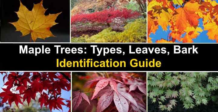 leafyplace.com