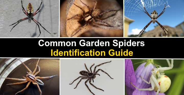 organon pictures of spiders